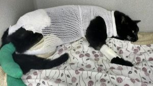 Miracle Kitty recovering in hospital