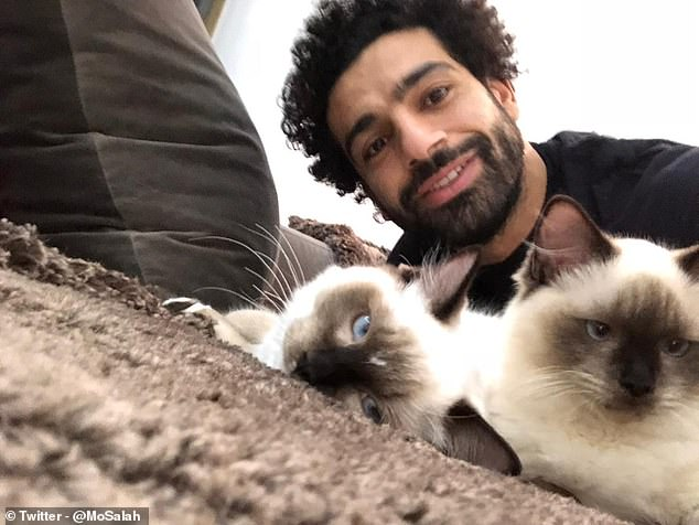 Mo Salah and his two Siamese cats1