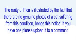Pica in cats