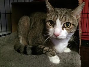 Pookie: 23-year-old cat surrendered to NC kill shelter determined by veterinarian to only be 12 years old