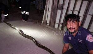 Snake kills six cats
