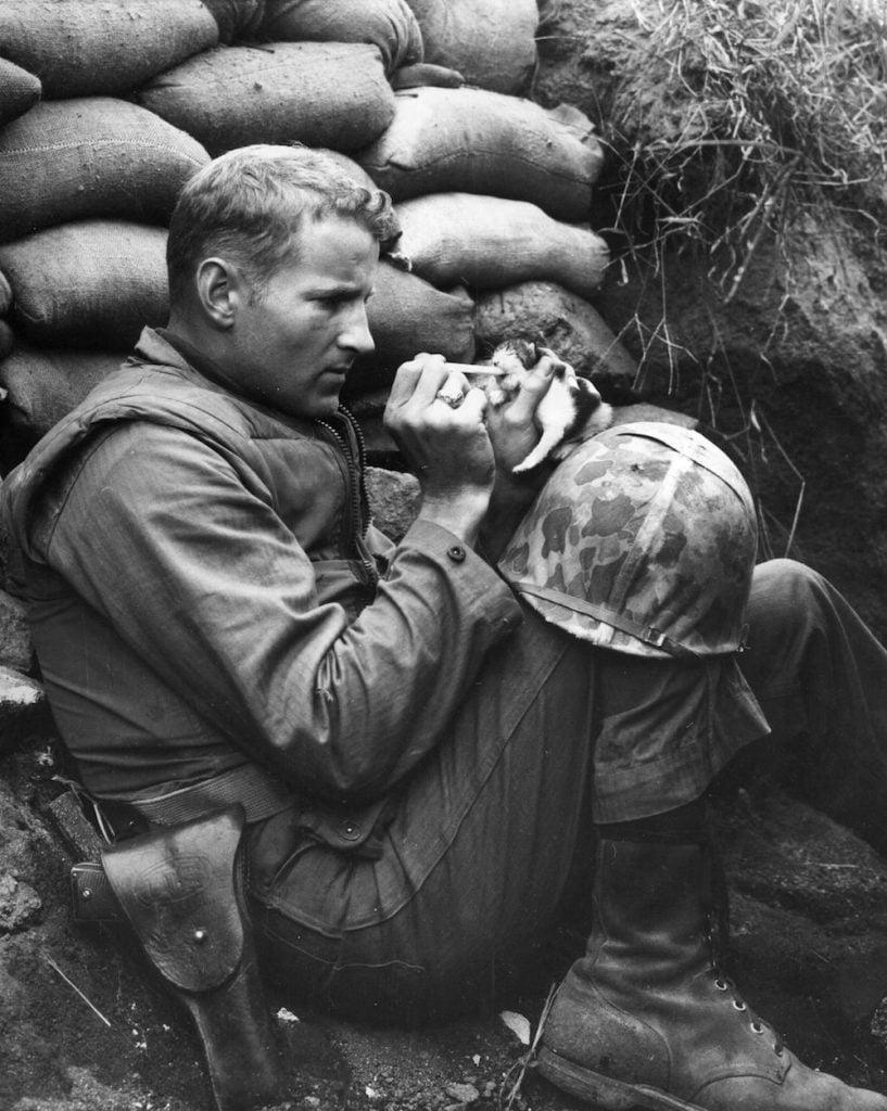 Soldier Feeds Kitten during Korean War