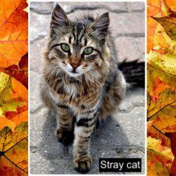 Beautiful tabby stray cat