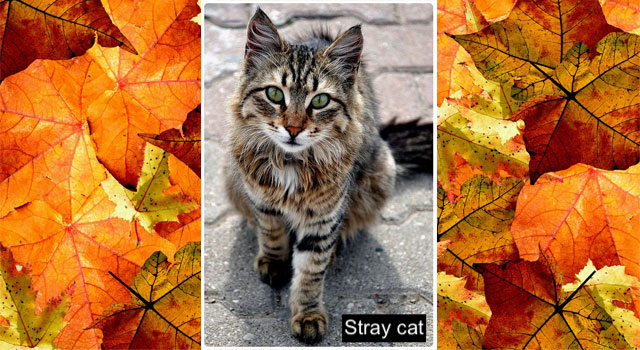 Beautiful tabby stray cat