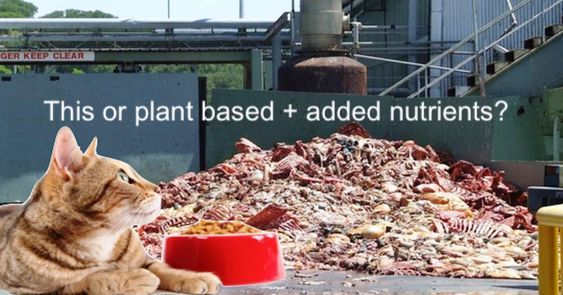 A lot of commercially prepared cat food is based on polluted carcasses of animals