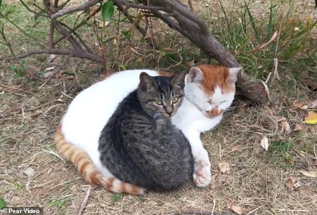 Young cat kneads older cat