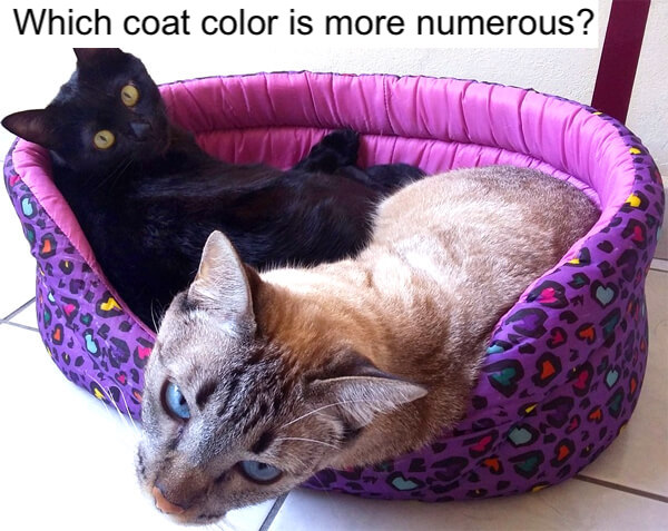 Black and tabby cats; which is the more numerous?