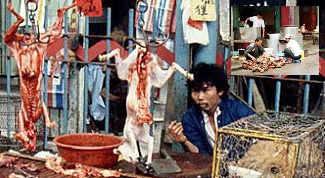 Cat meat market Vietnam