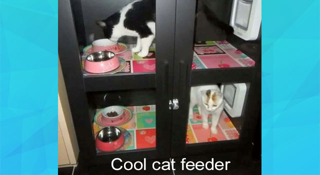 Cool feeding station for two domestic cats