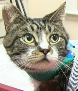 Cats killed and injured in Brighton: 2 cats dead and another 5 injured after being stabbed