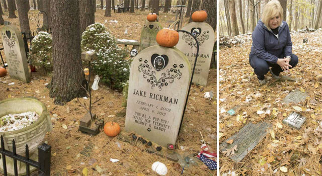 Lease has expired on pet cemetery so what happens to the animals?