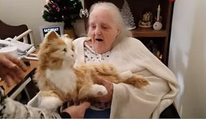 Heartwarming story on how lifelike robotic cats help elderly patients