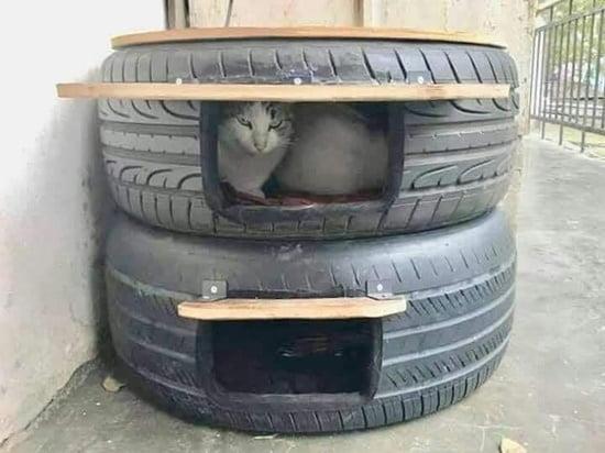 discussion do old automobile tires make a safe cat bed for feral cats. Black Bedroom Furniture Sets. Home Design Ideas