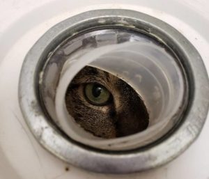 Cat peers out from sealed bucket