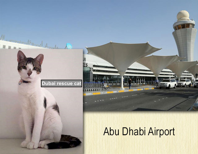 Abu Dhabi Airport and Dubai rescue cat