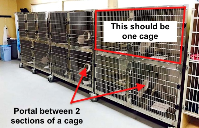 Cages were too small and lacked enrichment