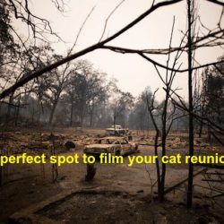 Camp fire cat video scams?