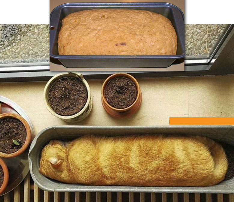 Cat looks like loaf in baking pan