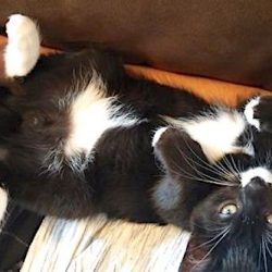 Cat on lap