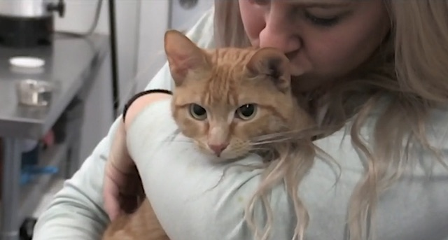 Cat rescued from almost certain death