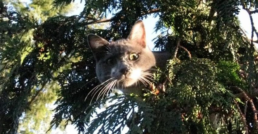 Cat rescued from tree by Dan Kraus1