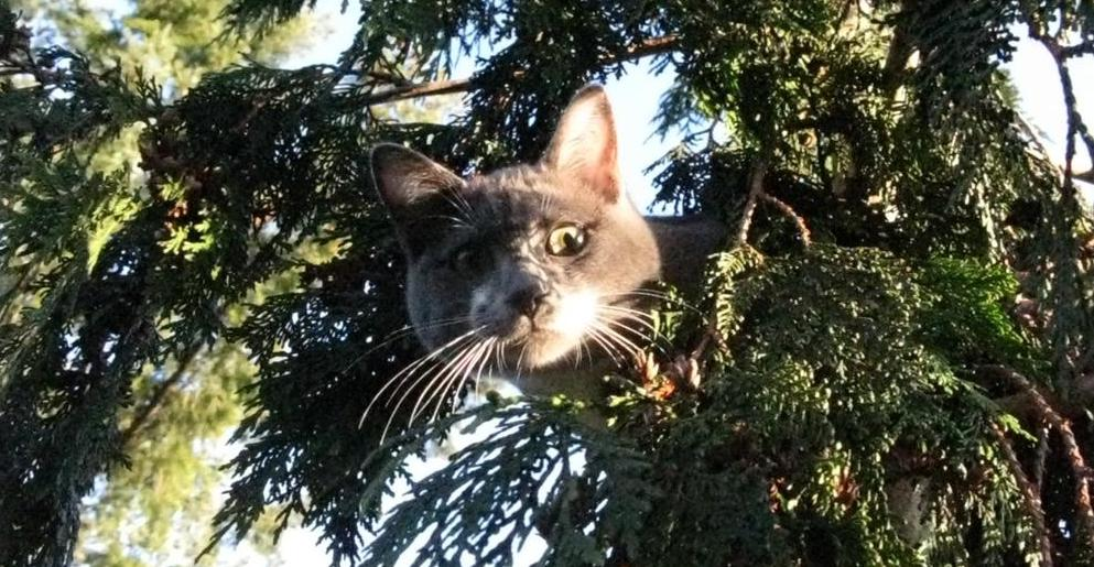 Tips And Tricks On Rescuing Cats From Trees Plus An