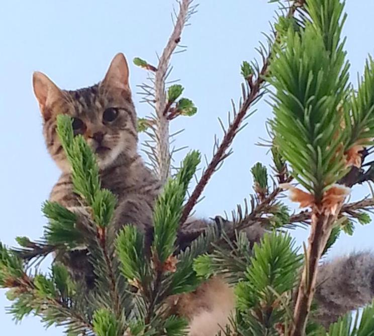 Cat rescued from tree by Dan Kraus