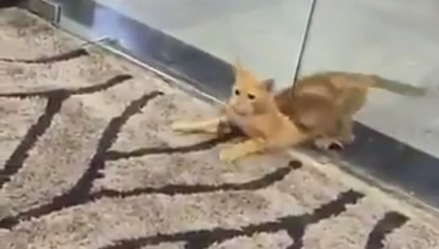 Cat wriggles under glass door