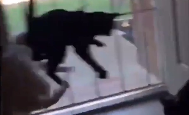 Cats scared by arrival of their dog buddy