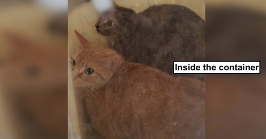 Cats trapped inside a taped up covered litter tray by side of road