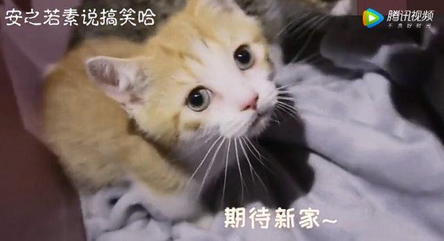 Cute kitten in new home
