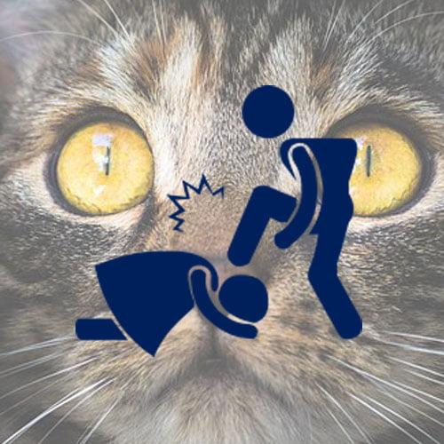 Domestic violence and companion animals