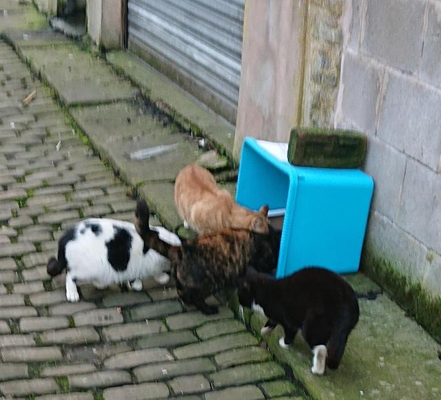 Feeding stray cats does not attract rats