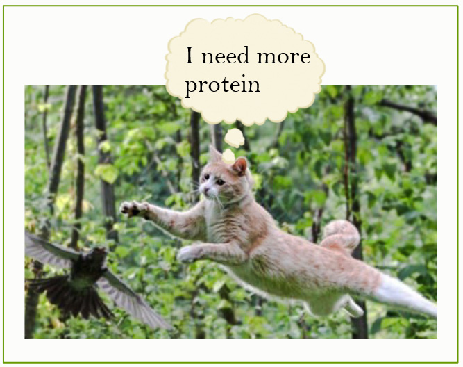 Cat needs more protein