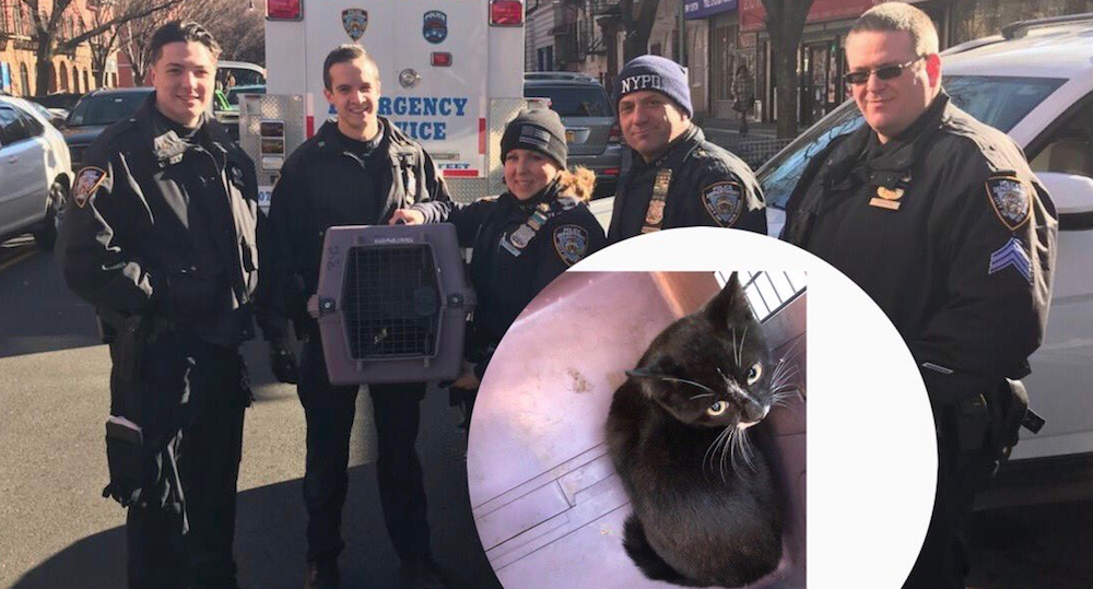 Kitten rescued from under car by cops