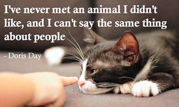 Do we like animals more than people?