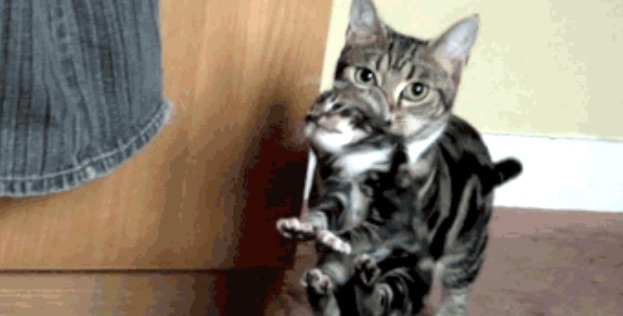 Mother cat carries kitten by scruff