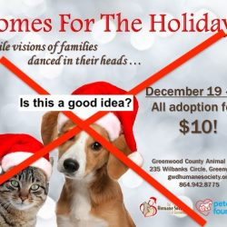Promoting adoptions at Christmas from animal shelters