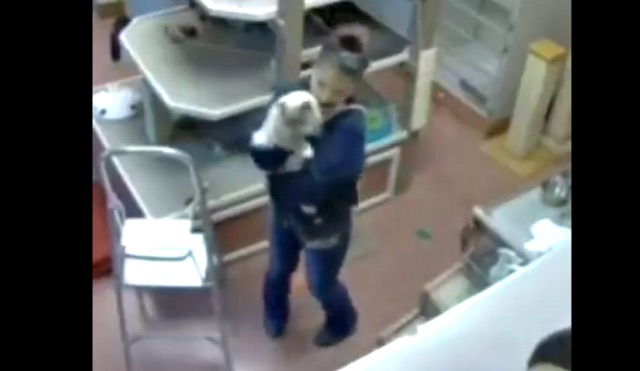 Security camera catches pet resort employee dancing with cat