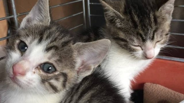 Sister kittens dumped in plastic bag in New Zealand