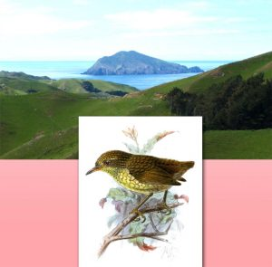 Stephens Island and the Wren