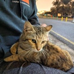 Street cat regularly jumps on this person's lap when he comes by