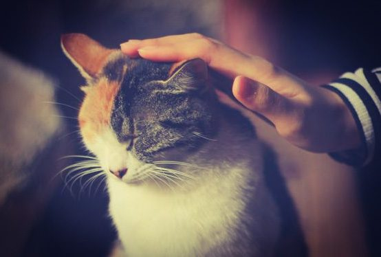 Stroking a cat can encourage the cat to self-groom