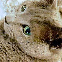 Laura Campbell's cat who helped her sleep more restfully.