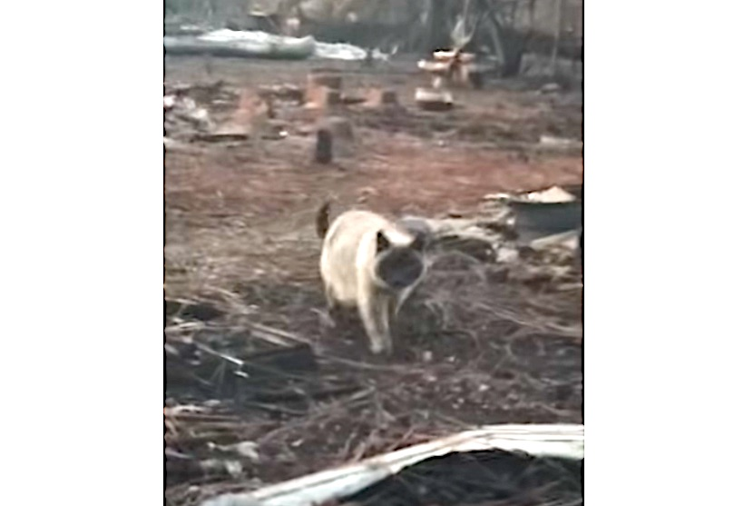 Timber emerges from the devastation of the fire