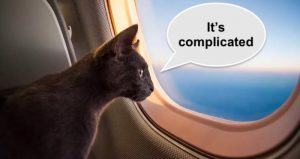 Cat travel after hard Brexit from UK to EU