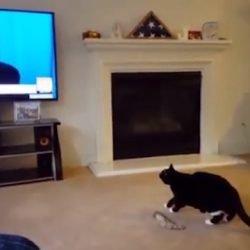 Trump on TV scares cat