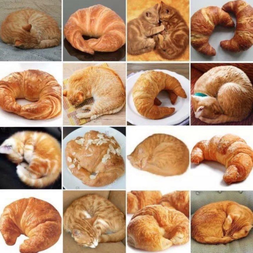 Uncanny resemblance between snoozing cats and croissants