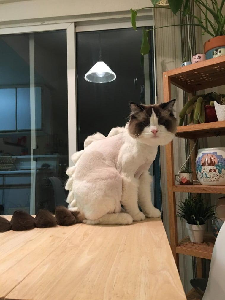 Weird cat hair cut