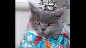 Wrapped Christmas cat
